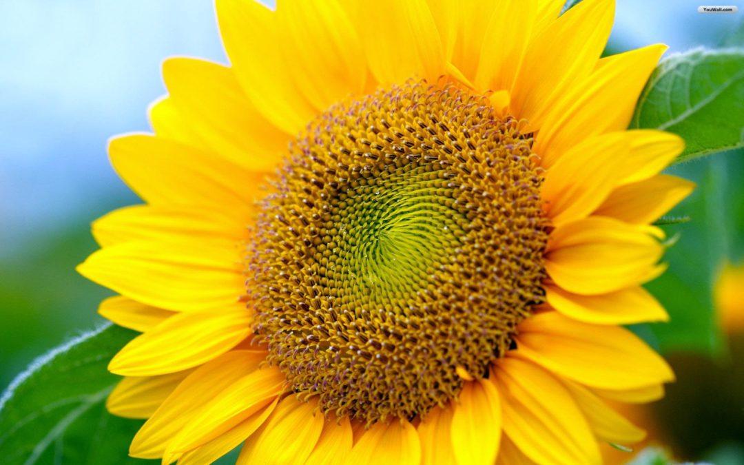 The Connection Between The Fibonacci Sequence and Ayahuasca: Fibonacci 3D Sculpture Video
