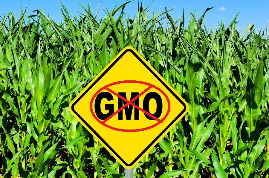 #490 | Jeffrey Smith: The Danger of GMO's, Healing Foods, and Saving the Human Food Supply